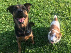 Dog Park Safety Etiquette