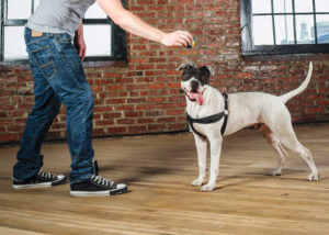 apartment obedience training for dogs