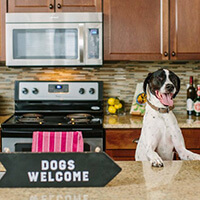 Pet-Friendly Apartments in Charlottesville